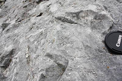 Devonský vápenec