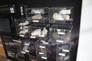 Hlavní část plaeontologické miniexpozice.